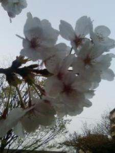 bungaku sayang